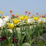 チューリップが咲き乱れる、浜名湖花博2014に行ってきた