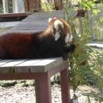 静岡市にある、日本平動物園に行ってきました